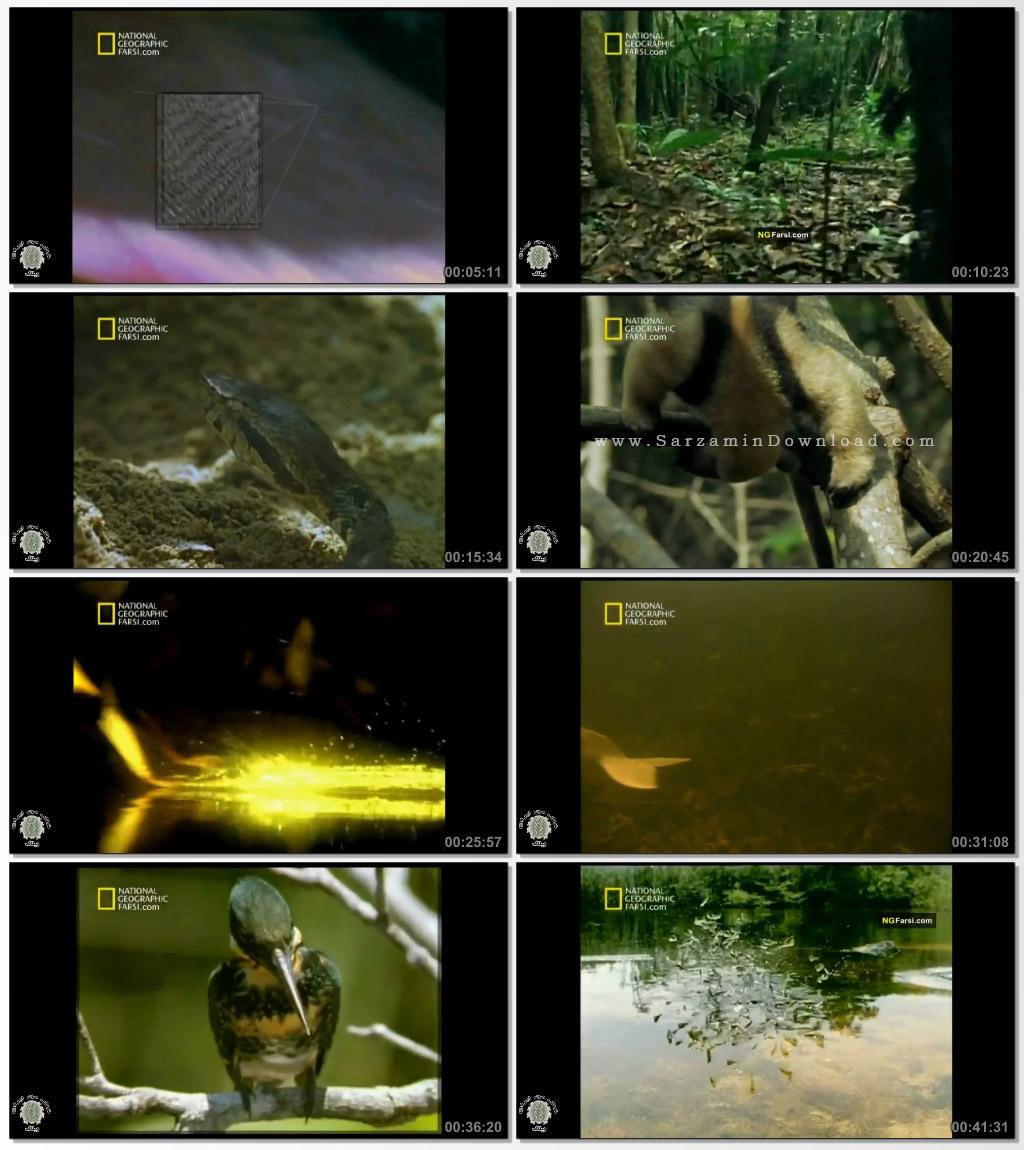 مستند نشنال جئوگرافی (جنگل های استوایی)